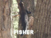 Photo Fisher